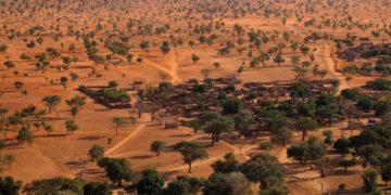 árboles en el desierto del Sahara