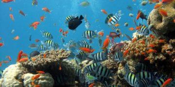 Descubren arrecife de 500 metros de altura en la Gran Barrera de Coral