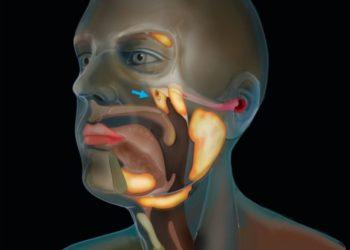 descubren un nuevo órgano de glándulas salivales