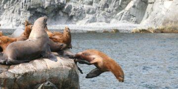 algas habrían provocado muerte animales marinos en Rusia