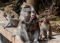 ataques monos en la India
