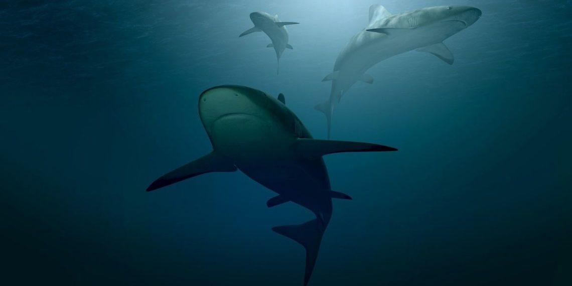 Tiburón blanco con un ojo