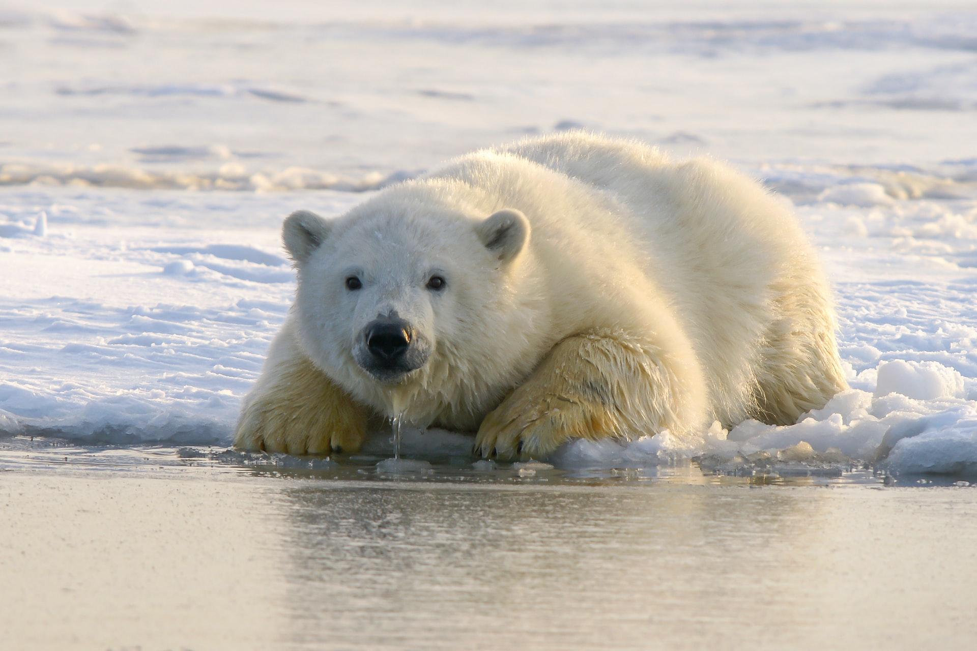 Los animales están en peligro: las especies amenazadas de extinción