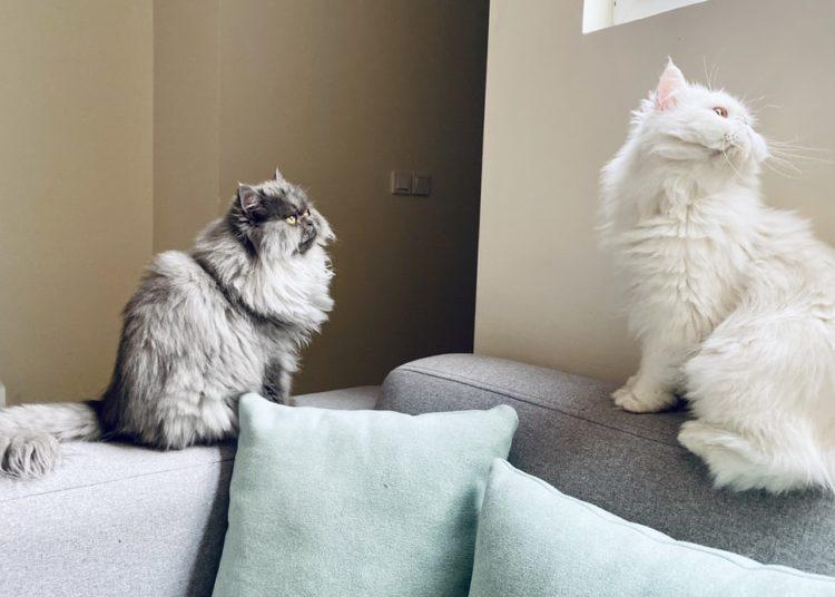 limpiar casa con mascotas