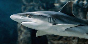 Colombia prohíbe la pesca de tiburones