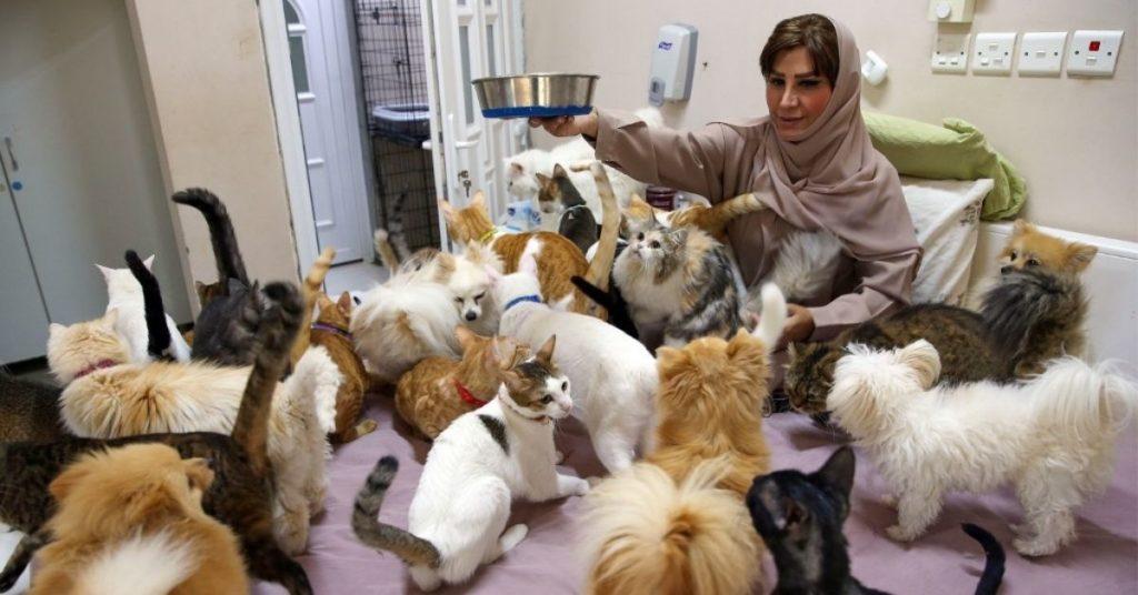 la mujer que rescata gatos en Omán