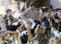 Maryam al Balushi ha rescatado a los gatos