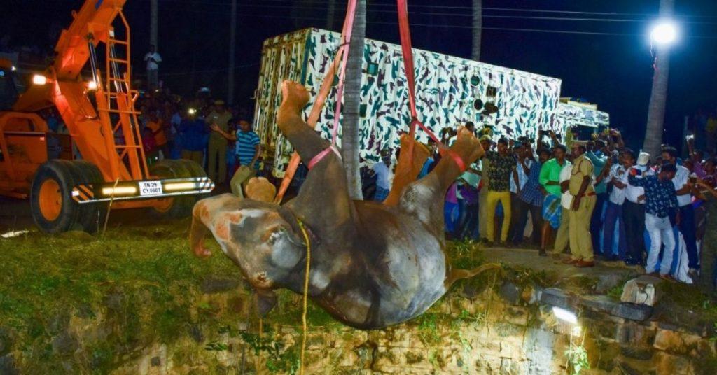 rescate de elefante en la India