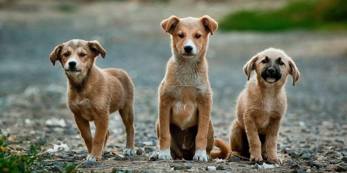 Cédula animal para mascotas en Colombia
