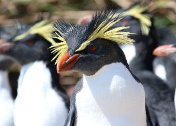 zona de protección de fauna en la isla de Tristán de Acuña