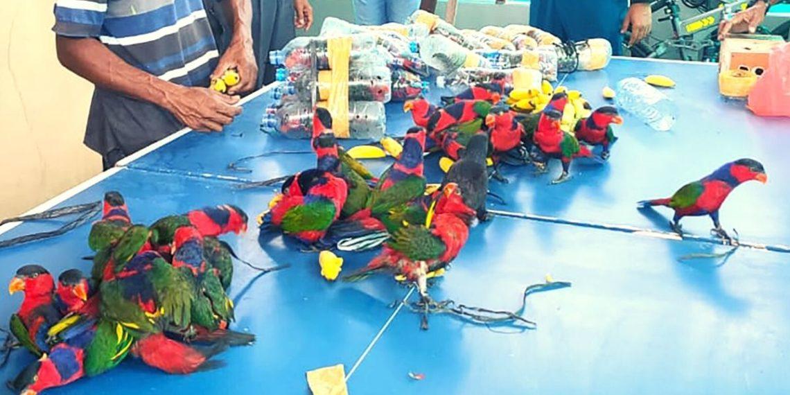 loros exóticos en Indonesia