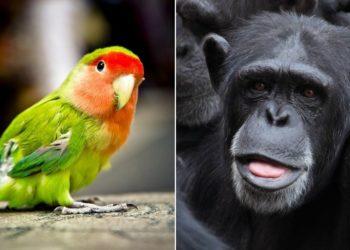 Tráfico de especies de animales en el mundo