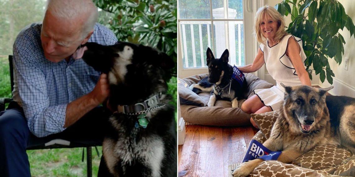 Major el perro de Joe Biden