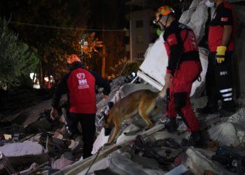 perro rescatista que salvó a un gato víctima del terremoto en Turquía