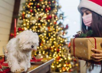 Perros Navidad regalos