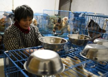 rescate de perros callejeros en China