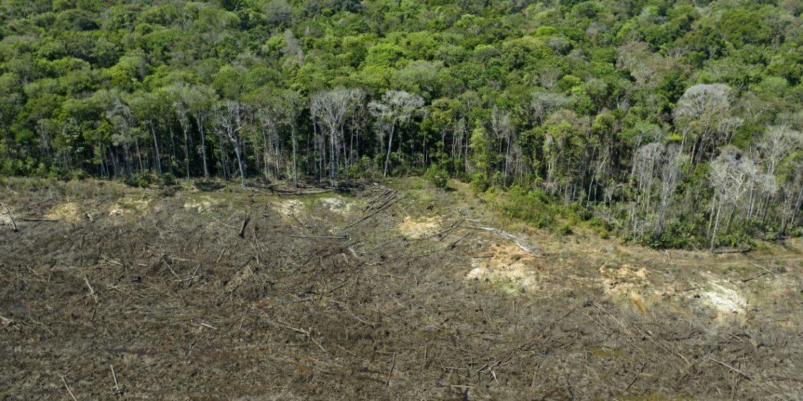 Amazonia perdió 8% de su territorio en 18 años por deforestación