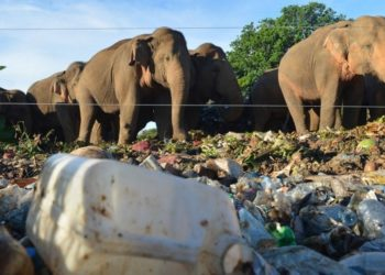 Elefantes buscando comida en basureros