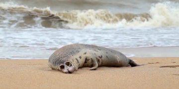 muerte de focas en el Mar Caspio en Rusia