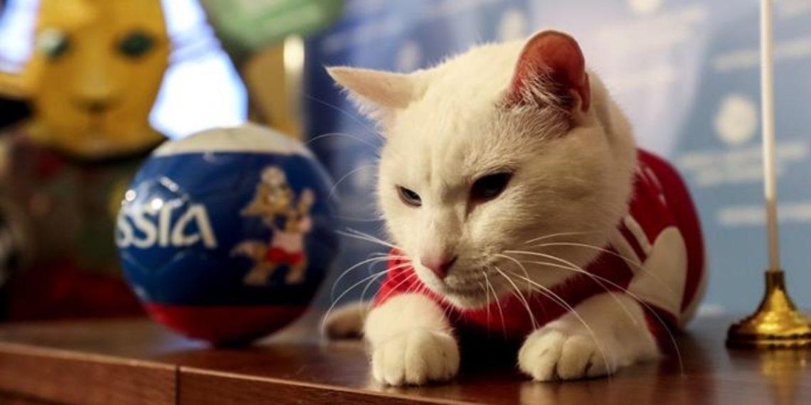 Los gatos del Museo Hermitage en Rusia