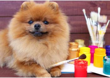 Conoce a 'Paw-blo Picasso', el perro pintor. Foto referencial: Freepik