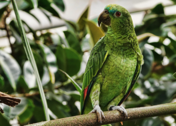 La impresionante y conmovedora reconstrucción de pico a un loro en Brasil