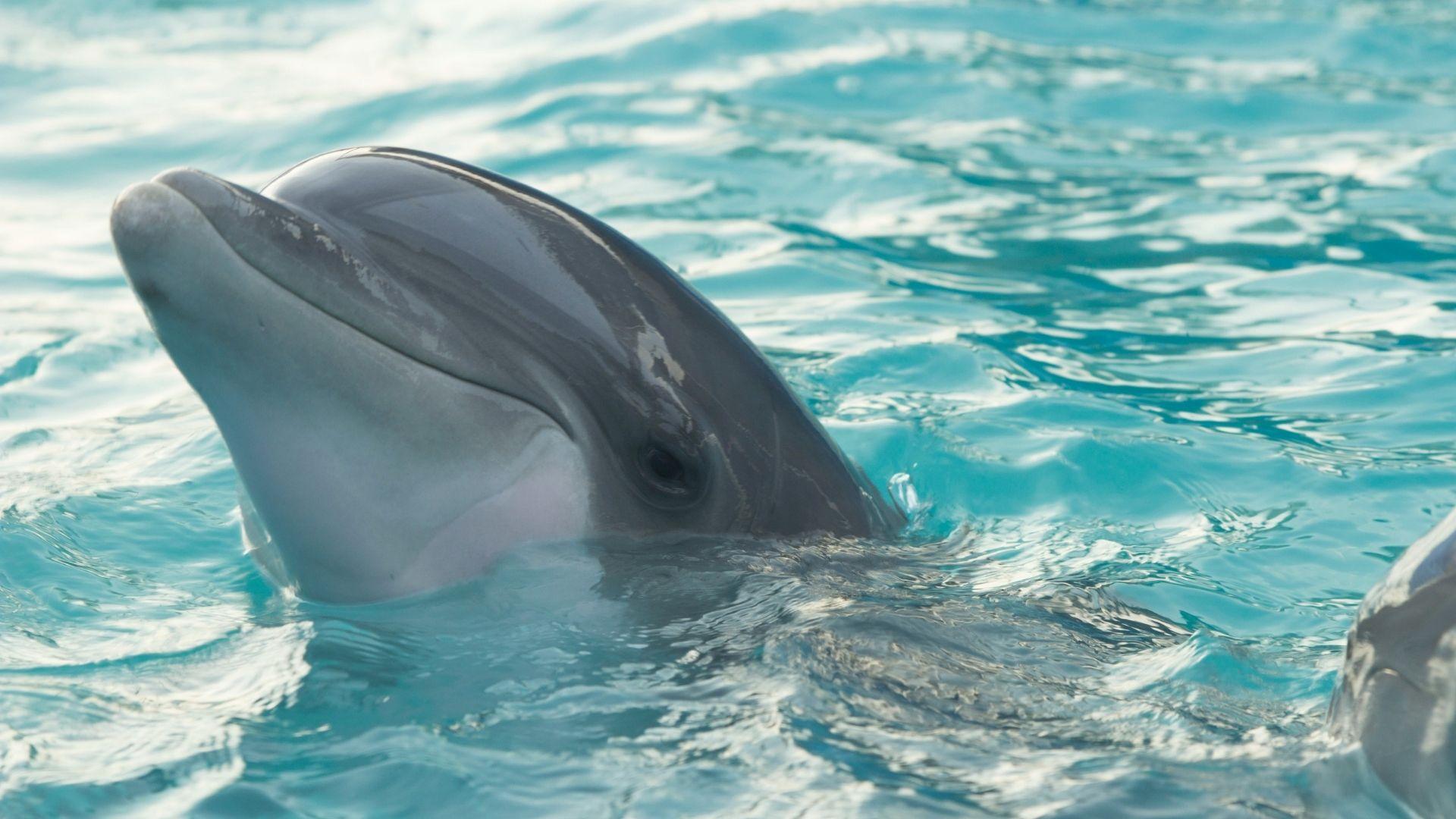 Hombre salva la vida de un delfín