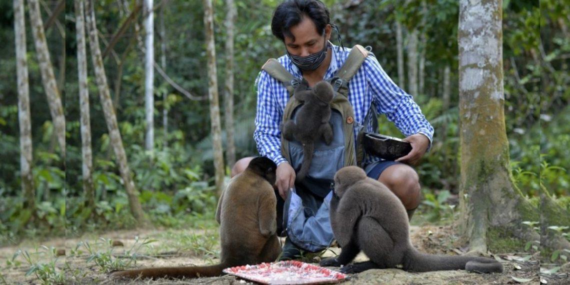 Indígena rescata monos huérfanos en la Amazonas