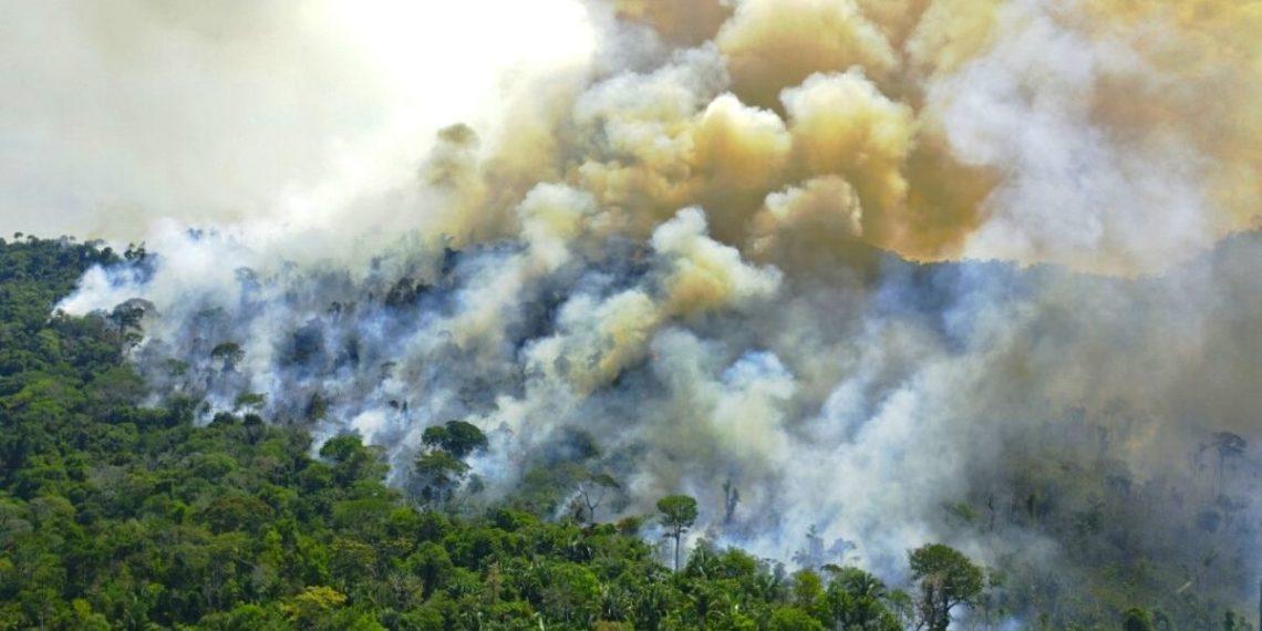 deforestación en la selva del Amazonas