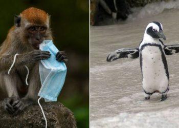 mascarillas ponen en peligro a los animales en medio de la pandemia