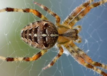 Una madre encontró decenas de arañas