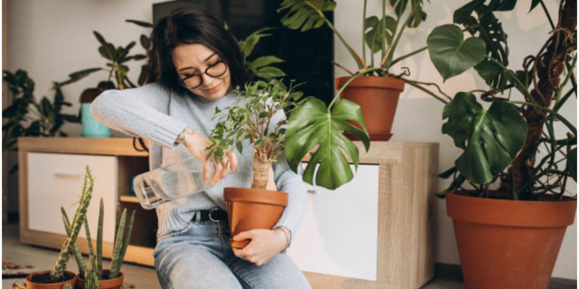 cuidar plantas de interiores