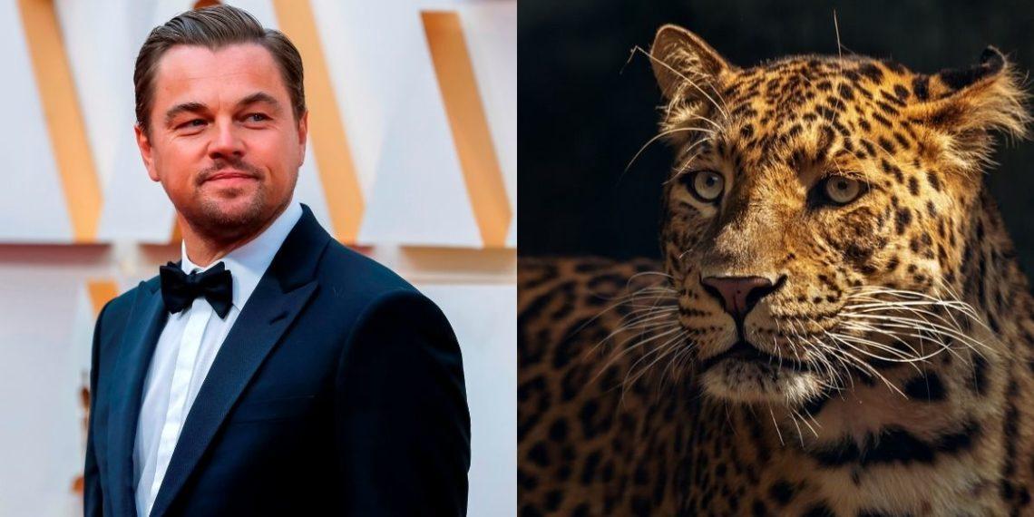 Leonardo DiCaprio jaguares