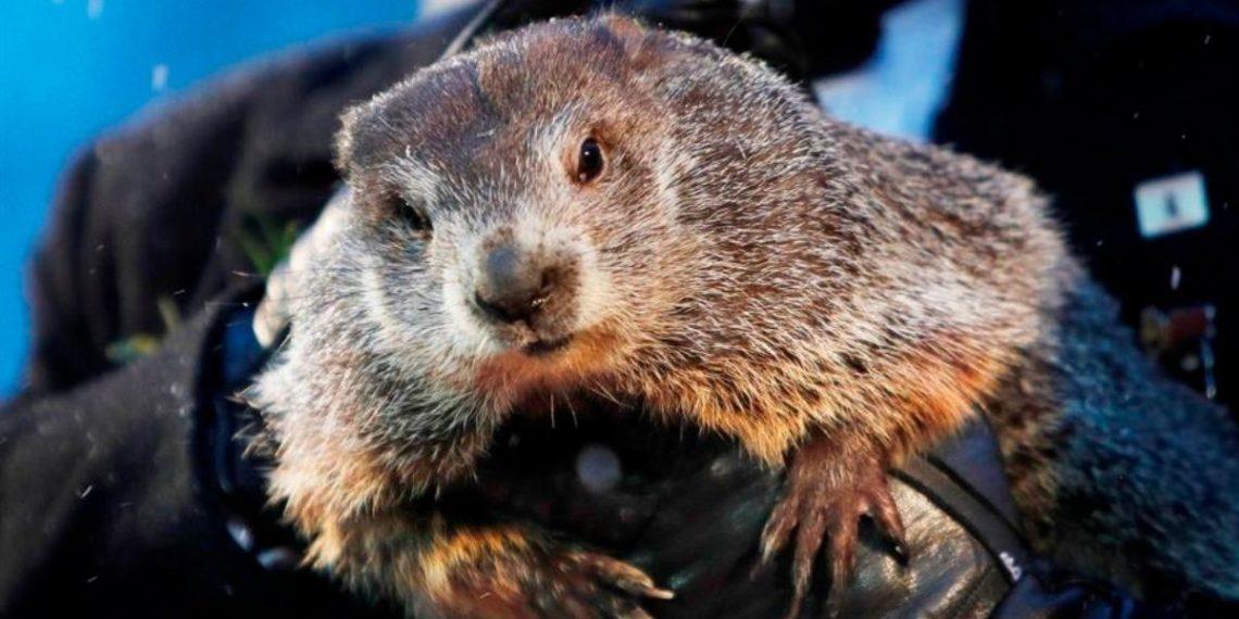 La marmota 'Phil' pronostica seis semanas más de invierno en Estados Unidos
