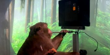 mono juega con su mente tras recibir un microchip de neuralink
