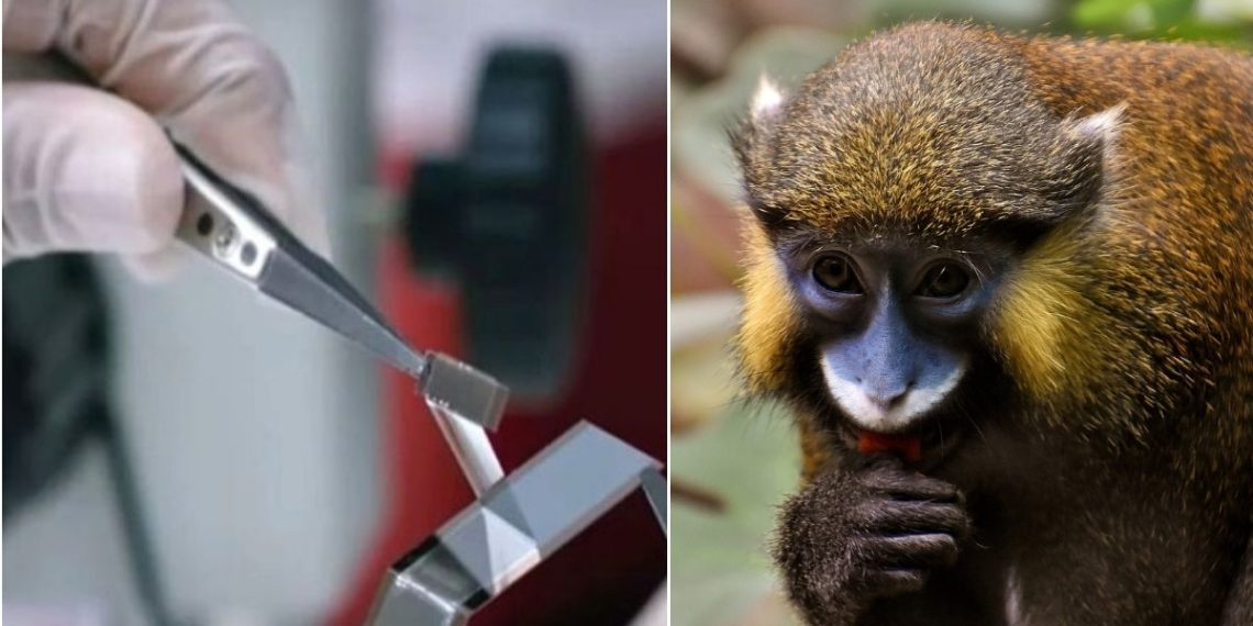 Neuralink logra implanta un chip a un mono