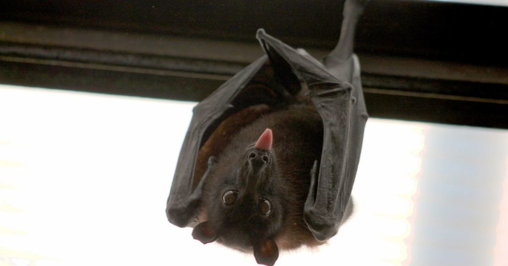el COVID-19 se originó en los murciélagos