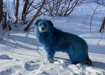 perros callejeros en Rusia