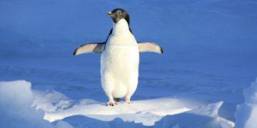 curioso pingüino de color amarillo