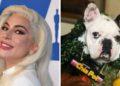 Los perros de Lady Gaga fueron recuperados