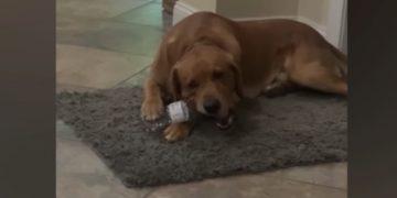 ¡Buen ejemplo! Este perrito aprendió a reciclar botellas