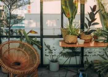 Plantas que atraen las buenas energías: aprende cómo ubicarlas en tu casa