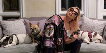 Perros Lady Gaga