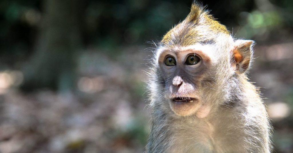 monos huérfanos en África