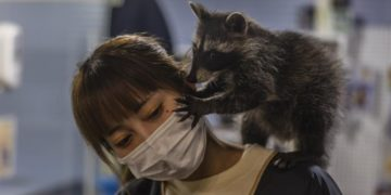 animales exóticos en cafés en China