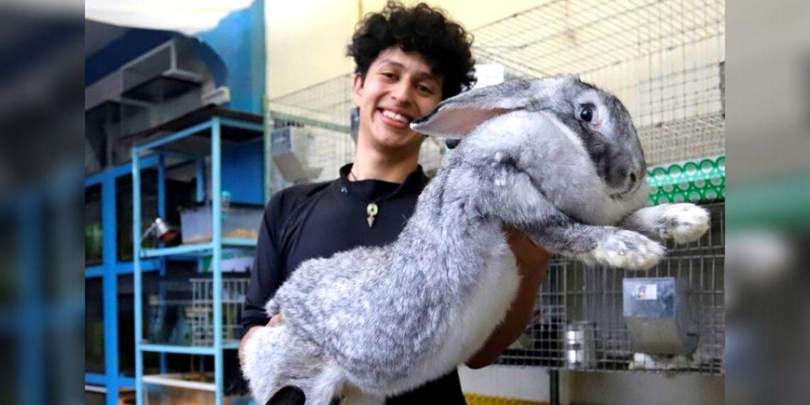 Conejos más grandes del mundo