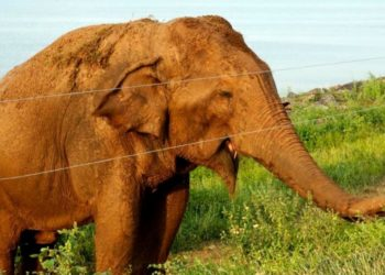 elefante en Sri Lanka