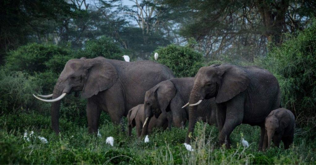 aguacates y elefantes en Kenia