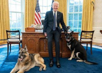 los perros del presidente Joe Biden