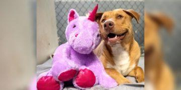 perro callejero roba peluche de unicornio